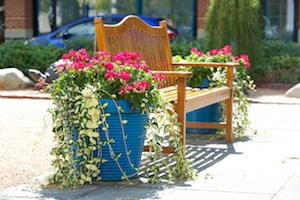 Healthy, Safe And Sustainable: Mindful Landscape Maintenance for Hospitals and Nursing Home Facilities