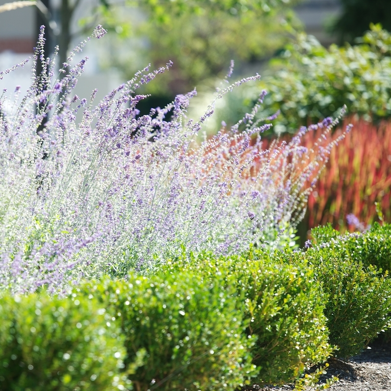 Plan Ahead: Why Now Is The Time To Schedule Landscape Maintenance & Projects