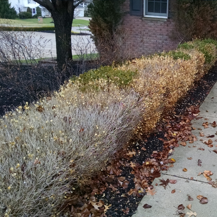 Prevent winter burn on your property