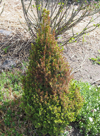 spring is usually the best time to treat winter damage to plants