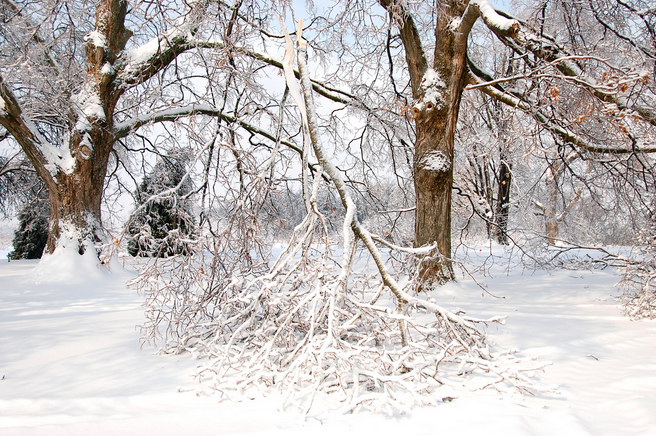 breakage is one form of winter damage to plants