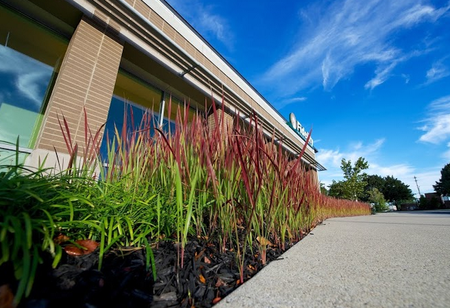 landscaping with ornamental grasses is great for defining borders