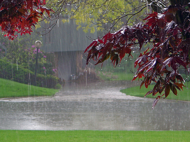 heavy rainfall in the summer can produce damaging lawn diseases in Northeast Ohio