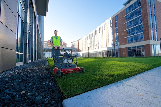 sod or seed is a common decision property managers make