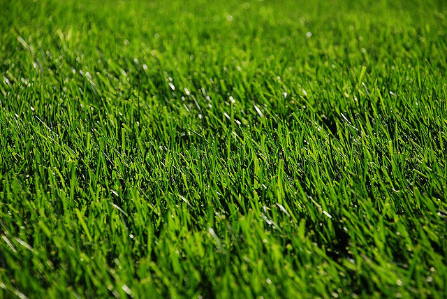 winterizing your lawn pays off royally come spring