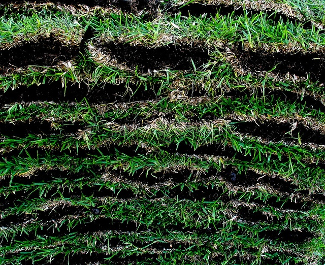 sod vs. seed? sod costs more than grass seed but provides instant gratification