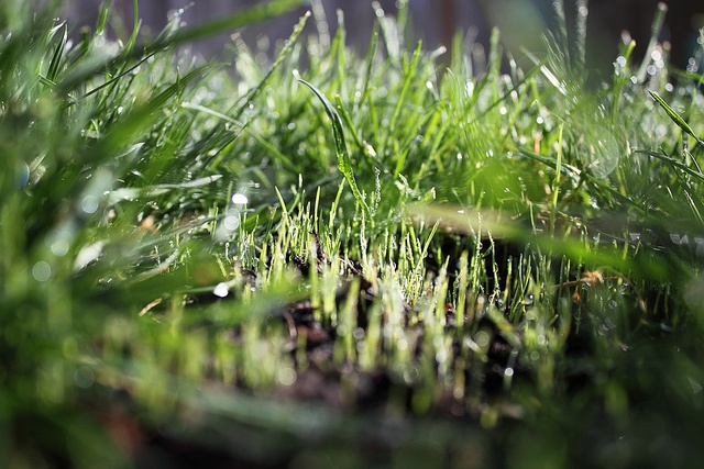 property size affects the cost of new turf installation