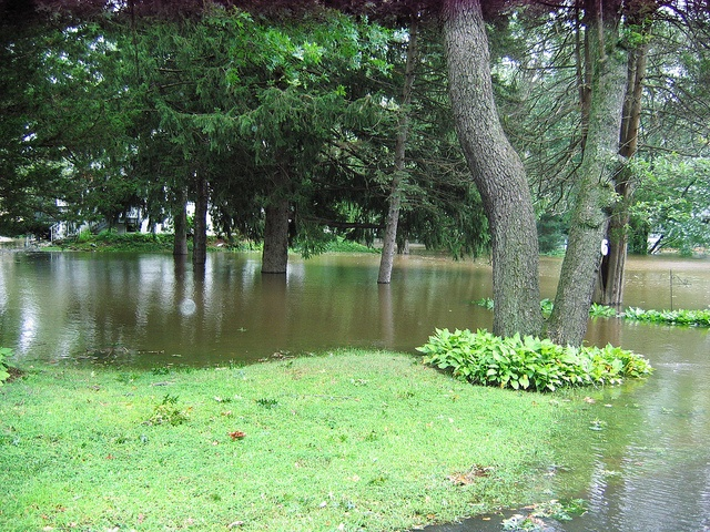 poor landscape grading can result in poor landscape drainage