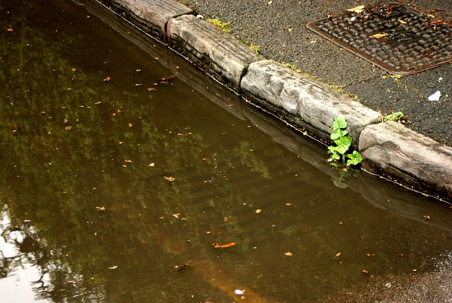 blocked drains are a result of poor stormwater management
