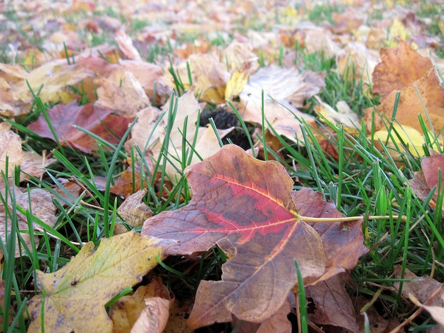 fall clean-up prepares your commercial landscape for a strong, healthy spring