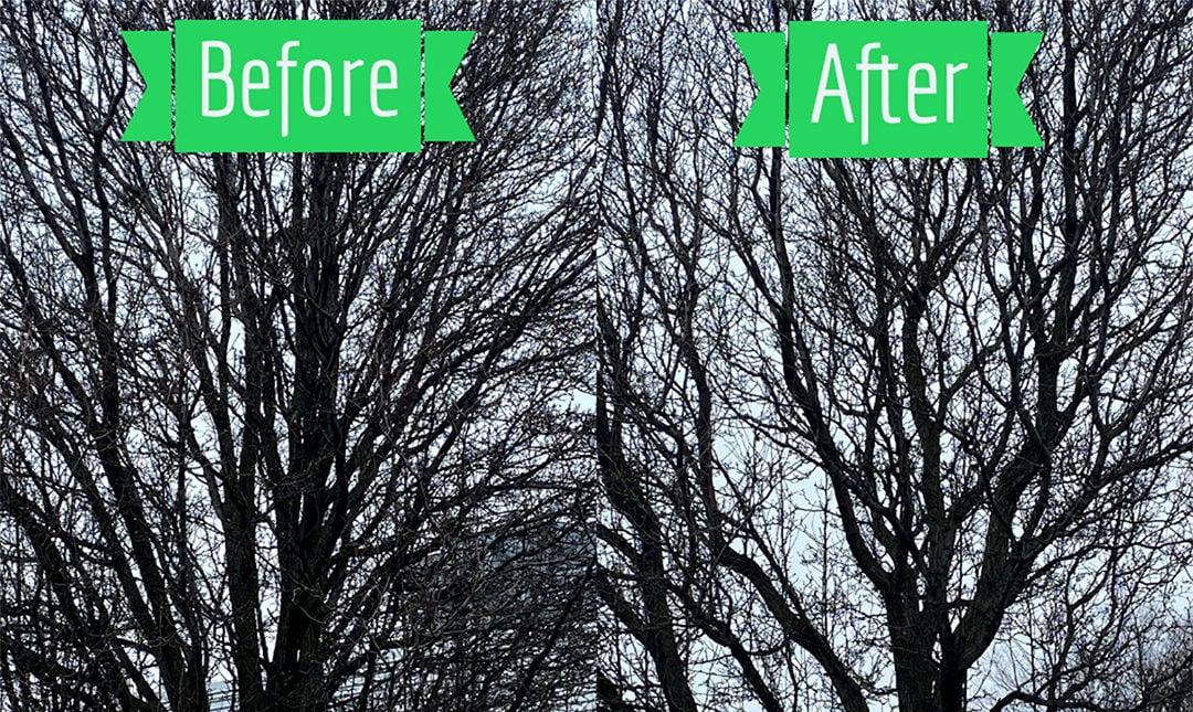 Dormant-Tree-Pruning
