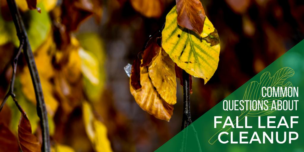 Fall Leaf FAQ.png