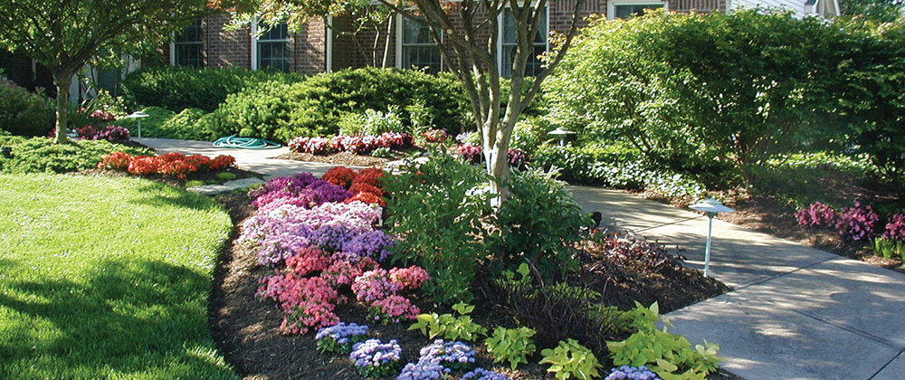 Shade Tree in commercial landscaping design