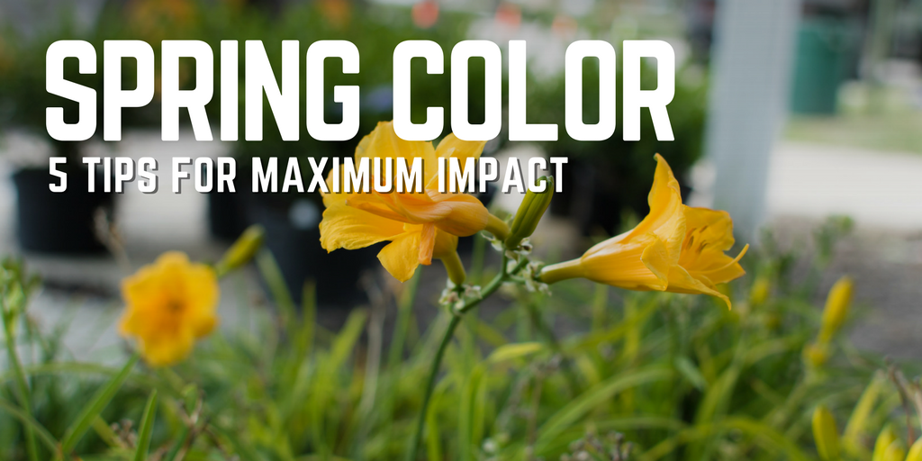 spring color (1)