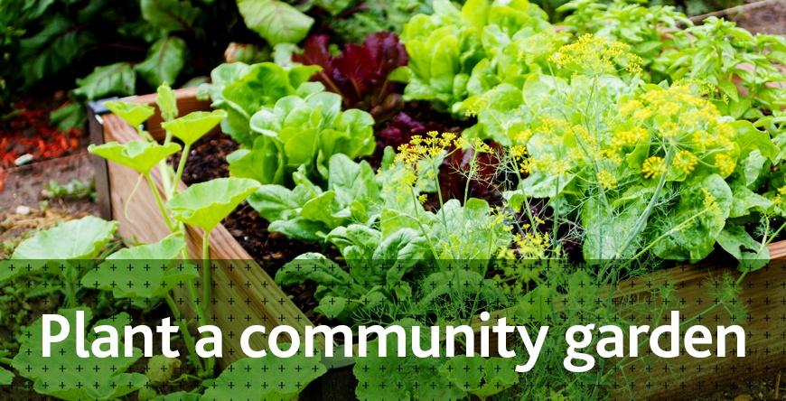 Community garden_header.jpg