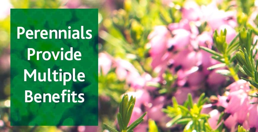 Perennials provide multiple benefits