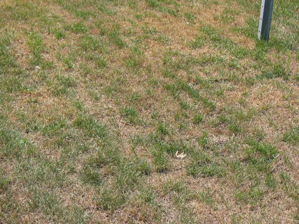 Burtn_Grass.png