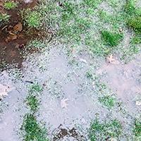 Lawn-Wet Areas2.jpg