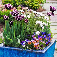Spring Color containers