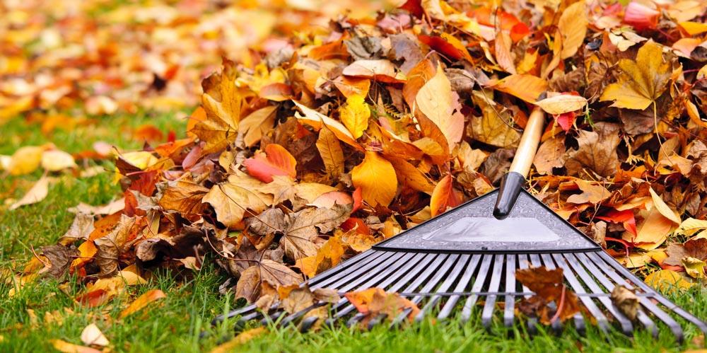 fall-landcaping-checklist-ohio.jpg
