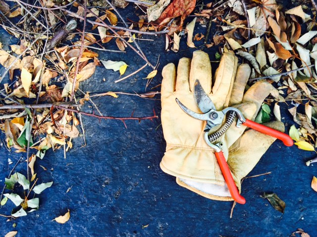 cutting back tall perennial grasses is an essential part of fall clean-up