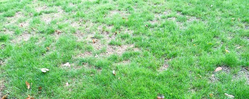 Browning and thinning out of your grass are signs of drought stress.