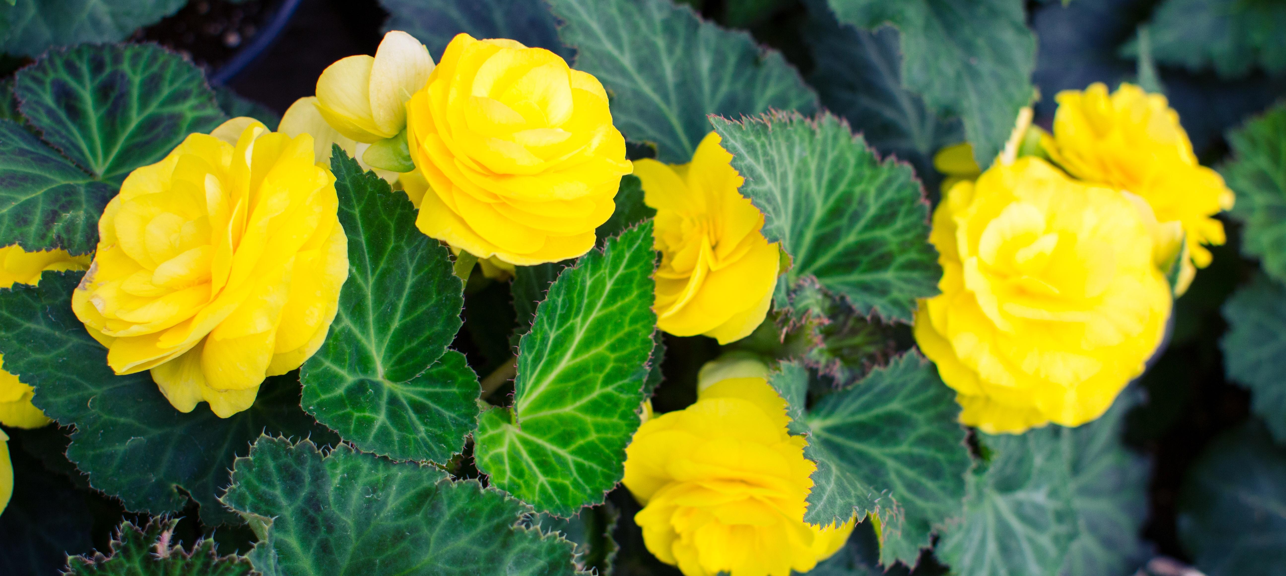 flowers-0016.jpg