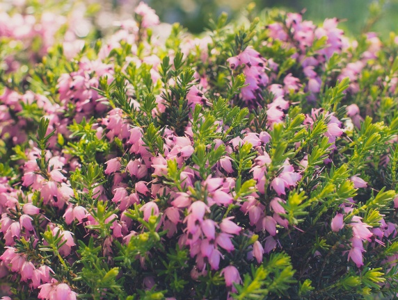 flowers-0023 cropped small.jpg