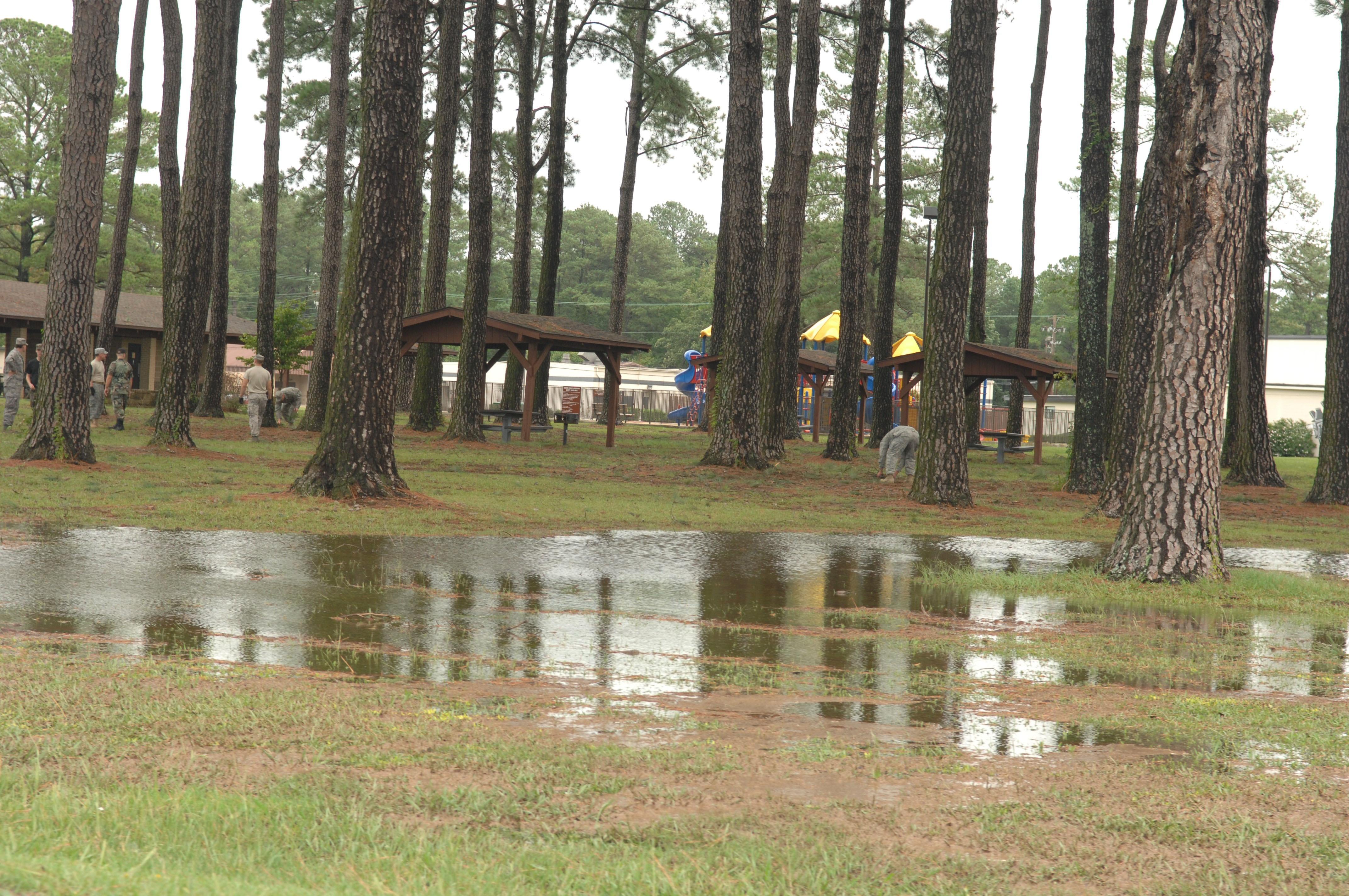 trees drainage issues flooding.jpg