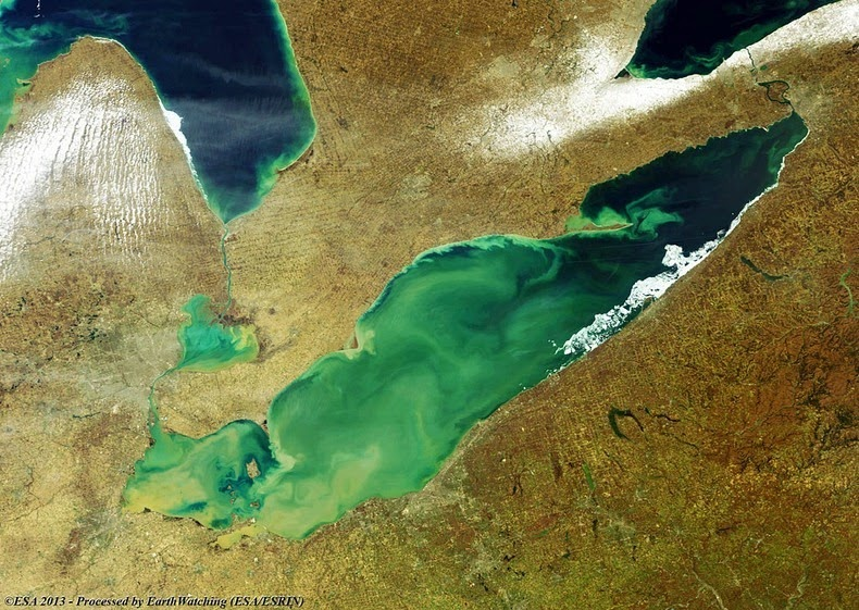 lake-erie-algae-4[2].jpg