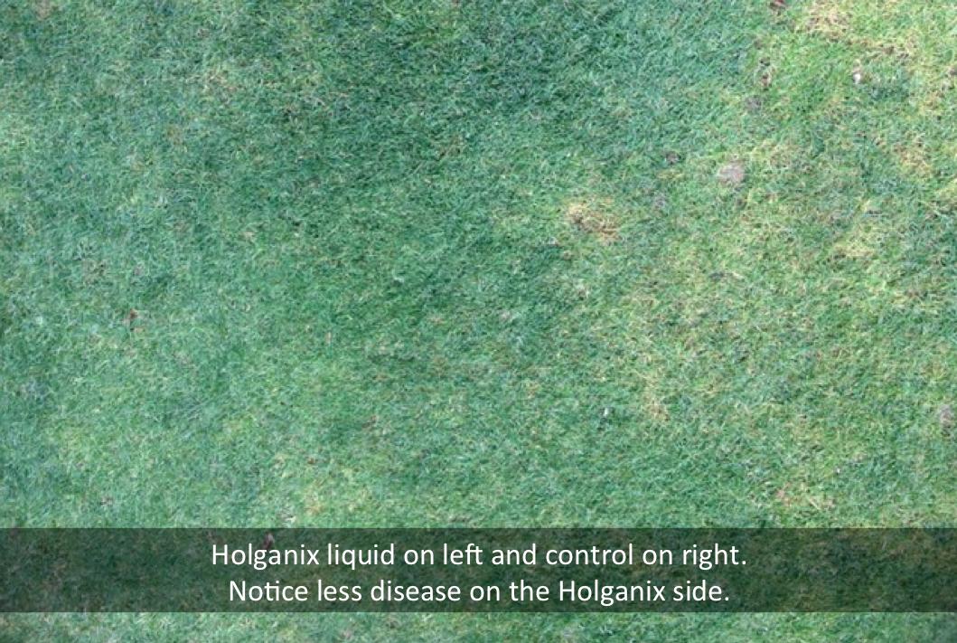 holganix.png