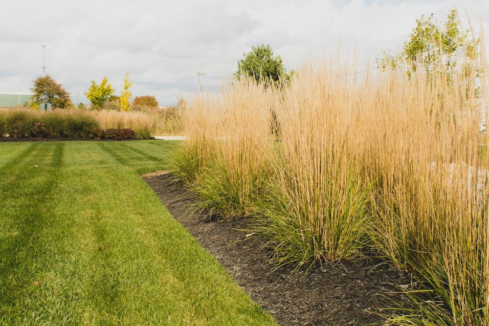 tall fescue drought tolerant turf