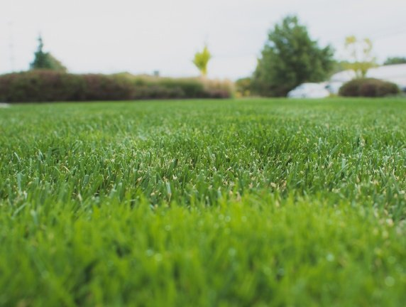 turf-1 small cropped.jpg