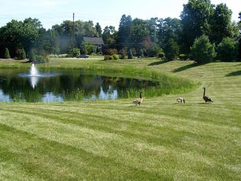 Professional landscaping around a retention pond is essential to its effectiveness.