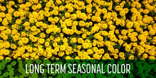 Schill Annual Flowers Blog_BLOG-2
