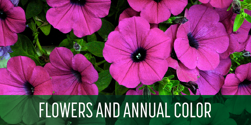 Schill Annual Flowers Blog_BLOG-5-1