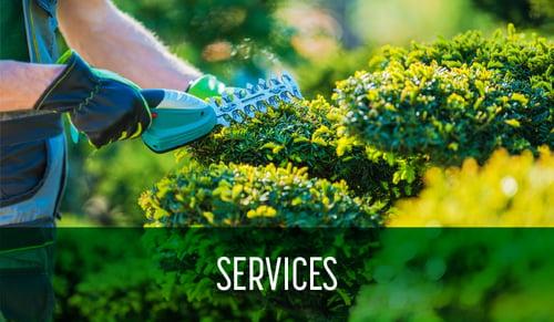 Schill Blog_Services