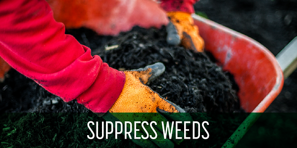 Mulch_suppresses_weeds_landscaping_sgm