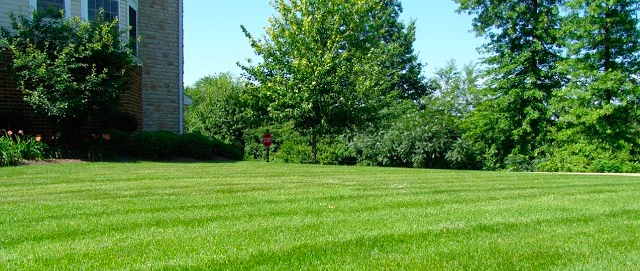 stronger grass roots is one reason to aerate your lawn in Northeast Ohio