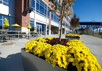 October is the best time for fall planting in commercial landscapes in Northeast Ohio