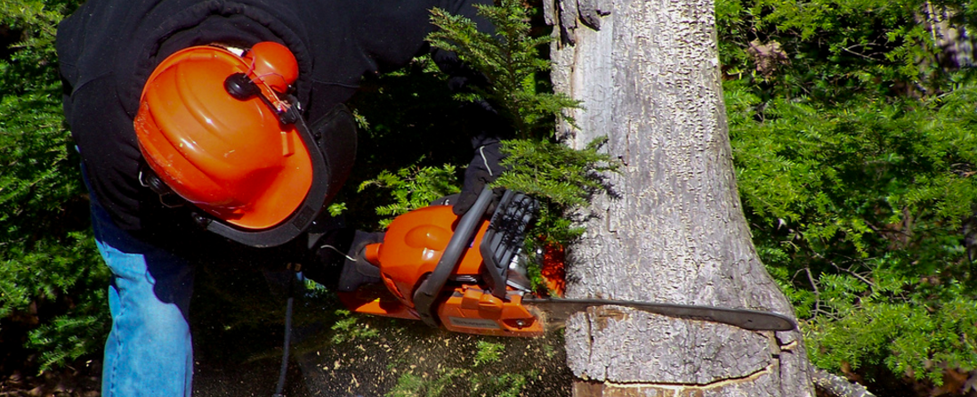tree care is a serious commercial landscape enhancement that is all about safety