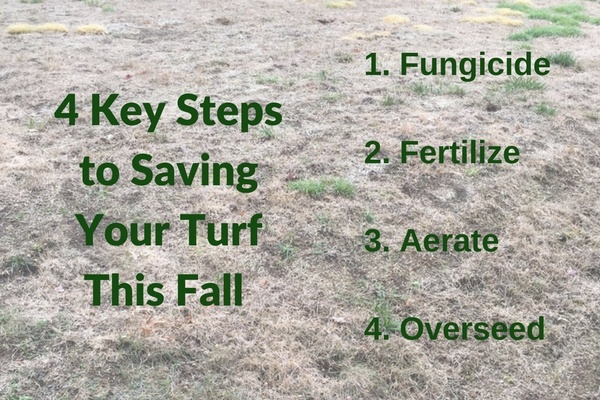 Drought stress can make your grass more susceptible to disease and insect pressure.