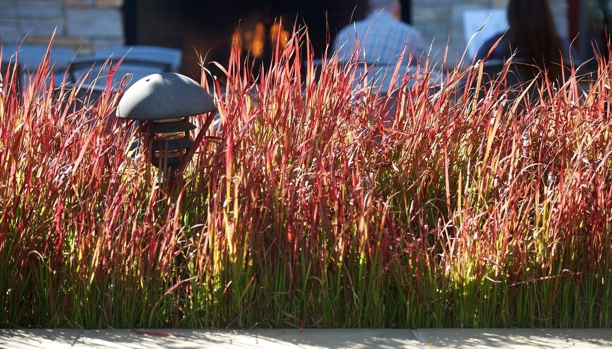 Grasses3-263072-edited.jpg