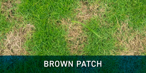 brown_patch_schill_landscaping