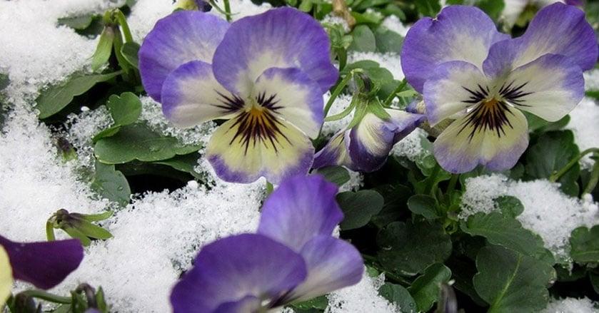 dormant-pruning-winter.jpg