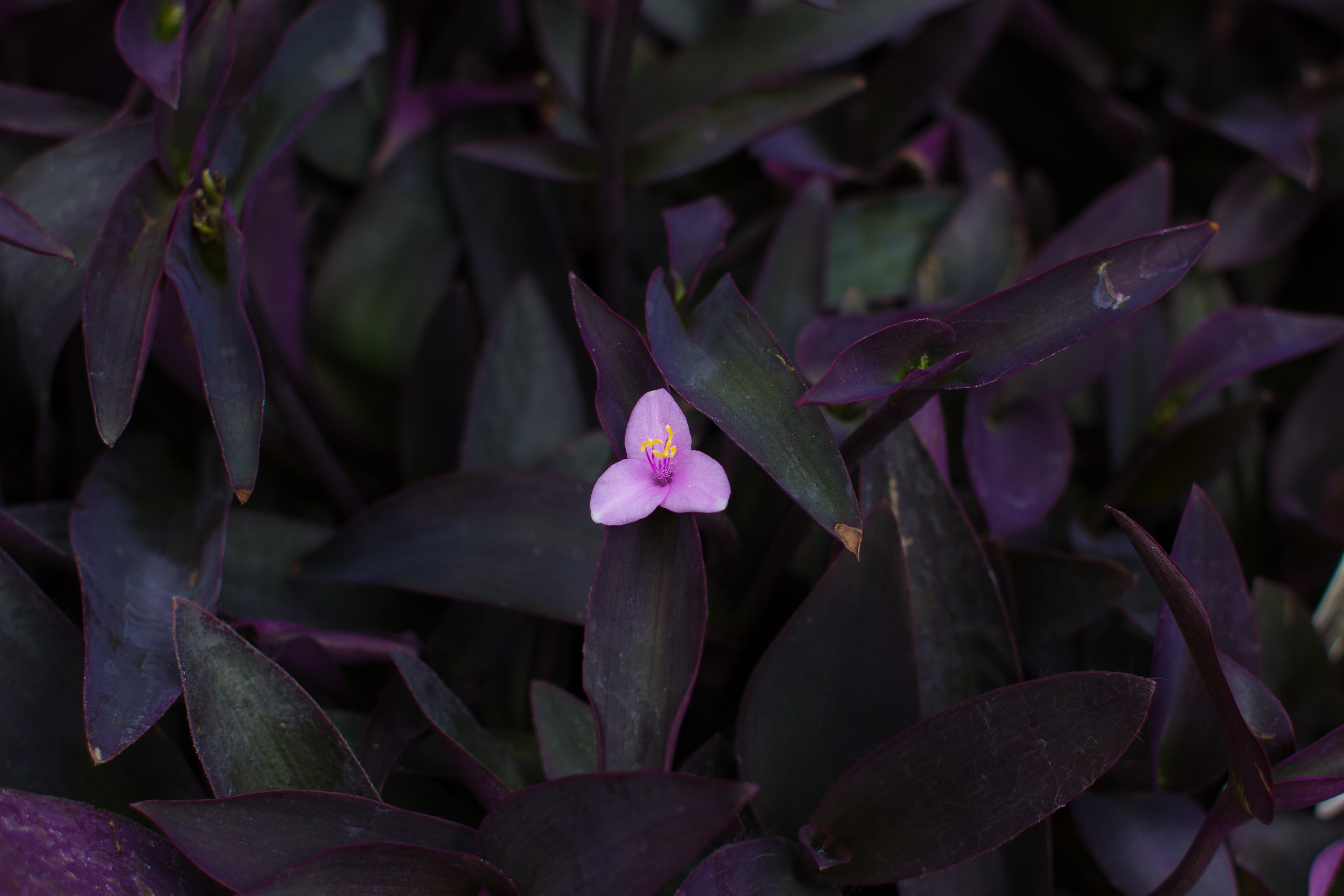 perennal flower size