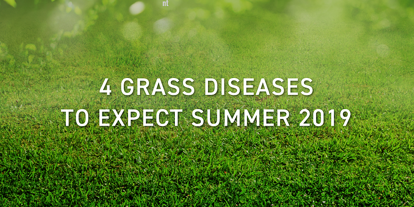 grass_diseases_schill_landscaping