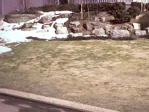 gray snow mold is a common grass disease