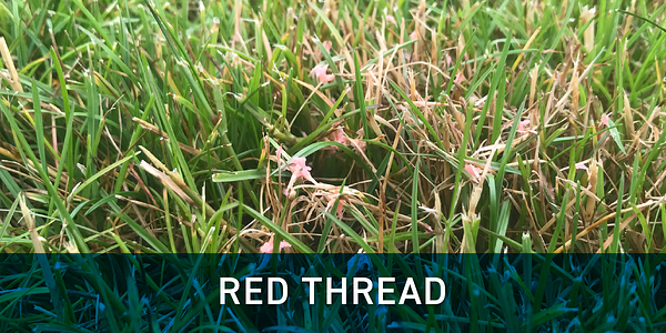 red_thread_schill_landscaping