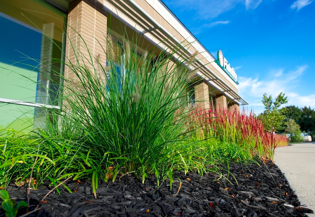 Landscaping mulch conceals plant roots